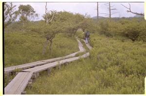 Leica M3, 50mm f2 Summicron, Kodak 160NC, Senjogahara's elevated pathway