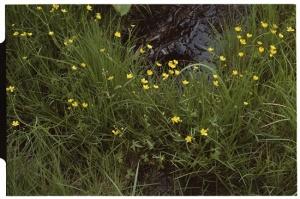 Leica M3, 50mm f2 Summicron, Kodak 160NC, Wild flowers at Senjogahara