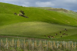 Countryside outside of Martinborough (Nikon D2H + 40mm f2 ULTRON)