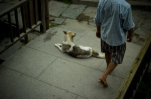 Villager and dog (Nikon D2H + 40mm f2 ULTRON)