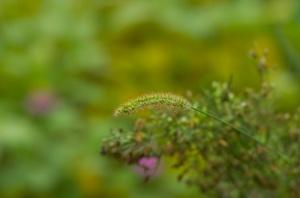Untitled, but shot at Jiangling Terraces (Nikon D2H + 40mm f2 ULTRON)