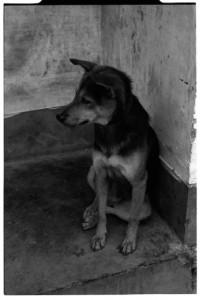 Obligatory doggy portrait  (Leica M6 + 50mm f2 Summicron + Fuji Neopan 1600)