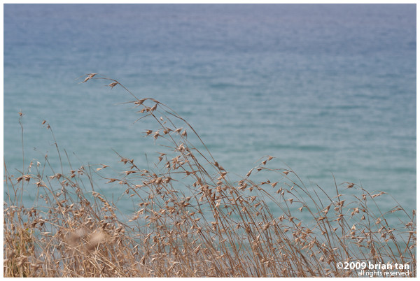 Parting shot: Dry grass in Cevlik