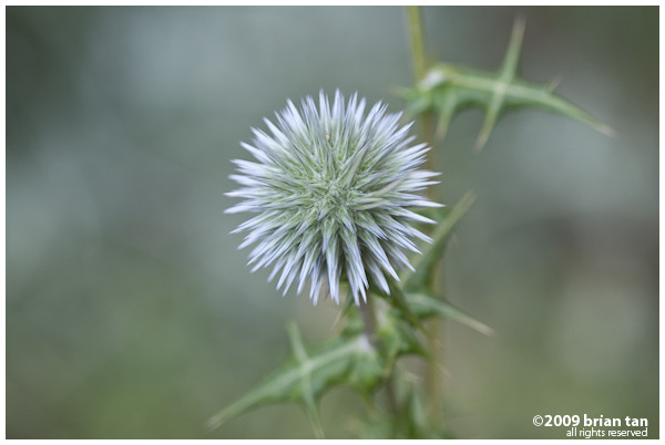 ... Nice looking plant I shot somewhere in Hatay