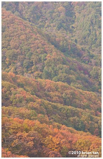 DSC1240-2010-10-23-21-48.jpg