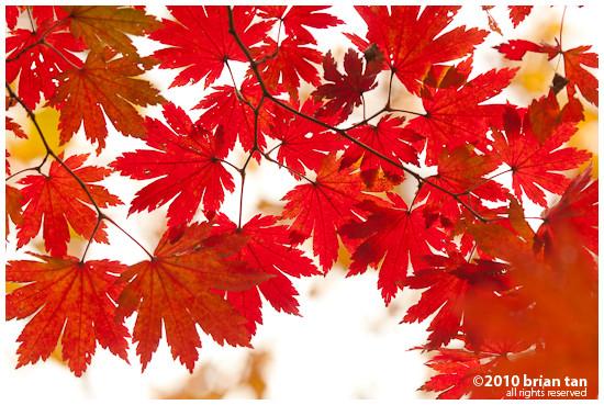 DSC1198-2010-10-23-21-48.jpg