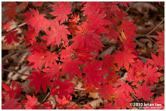DSC1242-2010-10-23-21-48.jpg