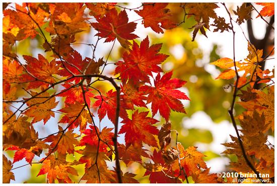 DSC1185-2010-10-23-21-48.jpg