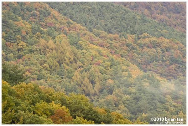 DSC6967-2010-11-7-20-37.jpg