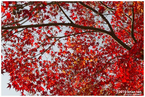 DSC7315-2010-11-13-19-53.jpg