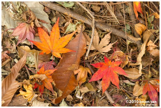 DSC7407-2010-11-14-17-48.jpg