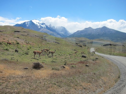 Guanacos on the way to Las Torres. Notice the sharp triple peaks in the background? That's where we're heading on tomorrow's hike.