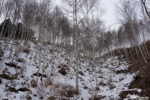 The trees on the way up are somewhat white. Don't despair - a few more km uphill to go...